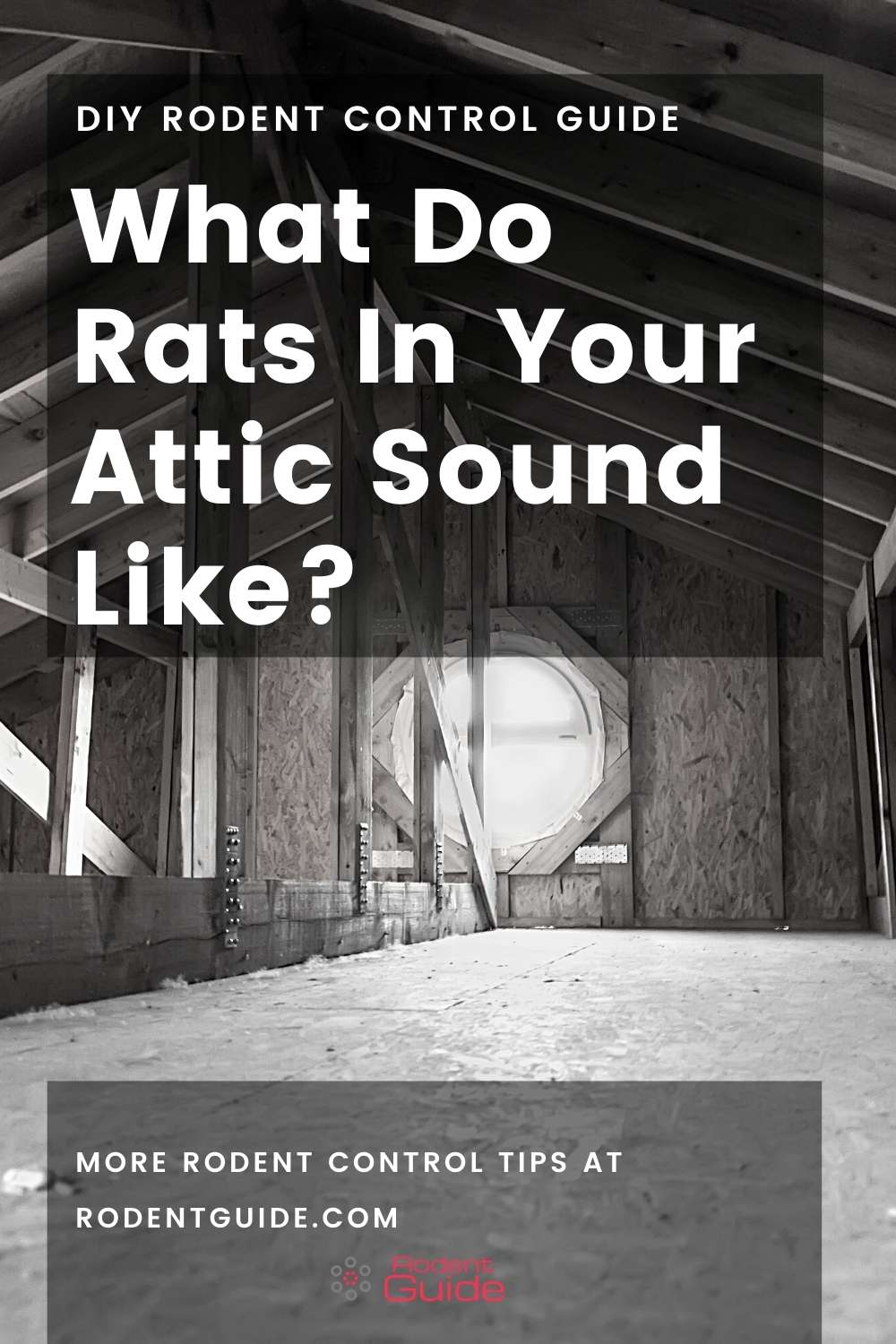 What Do Rats In Your Attic Sound Like