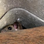 where do mice hide in a house 10 places