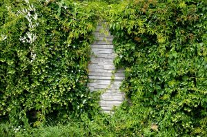 How To Deter Rats From your Yard cut down shrubs