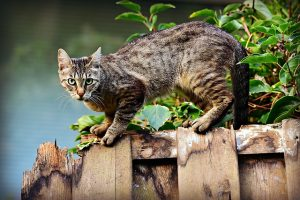 How To Deter Rats From your Yard get a cat