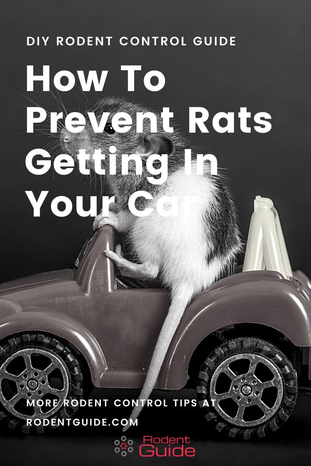 How To Prevent Rats Getting In Your Car