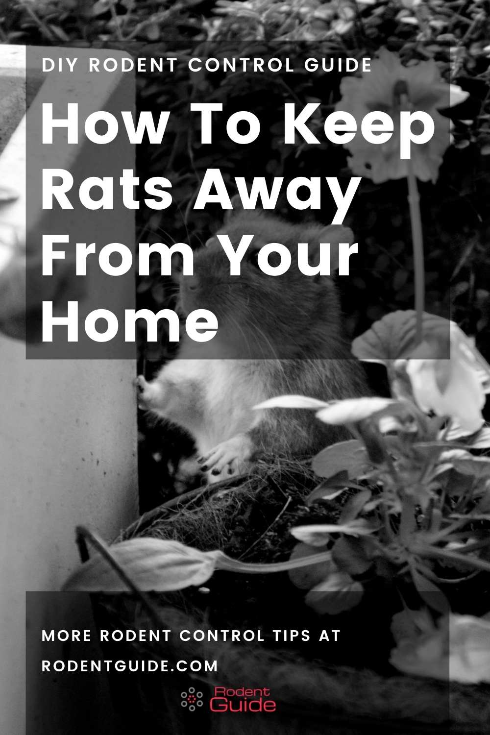 how to keep rats away from your home