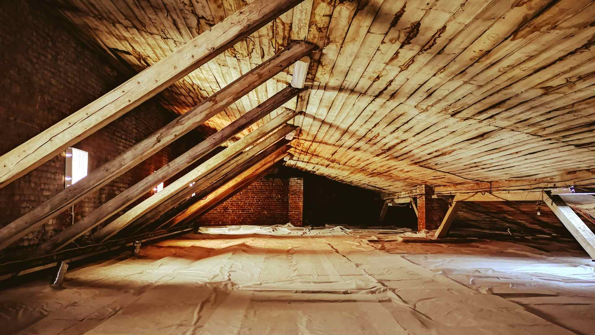 Signs You Have Mice In Your Attic (1)