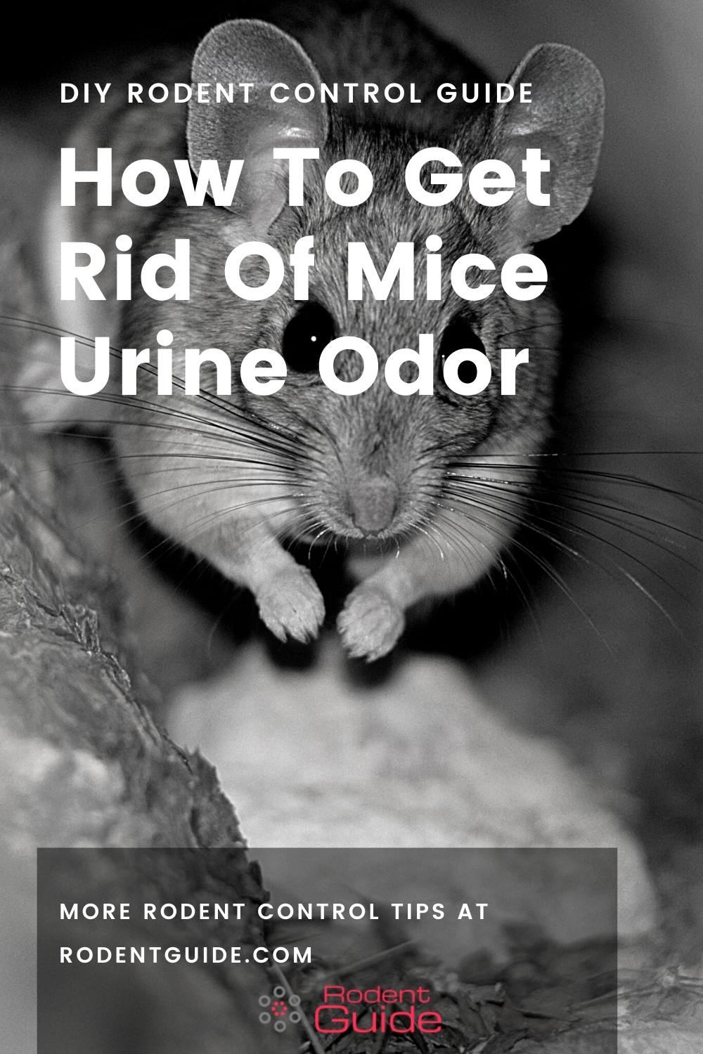 How To Get Rid Of Mice Urine Odor