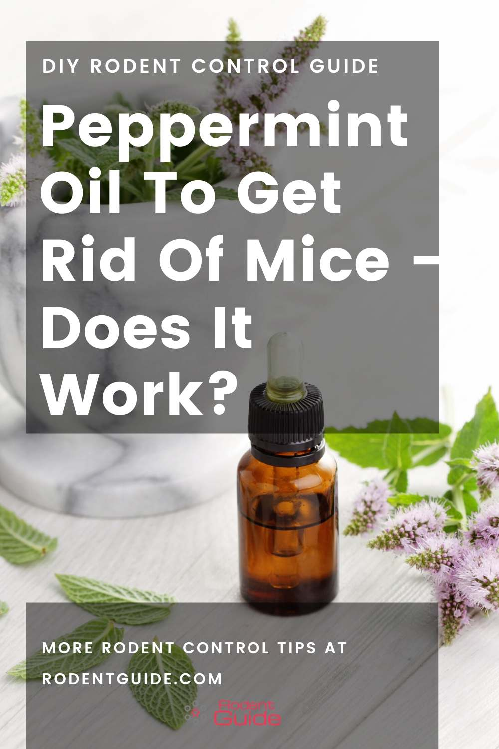 Peppermint Oil To Get Rid Of Mice - Does It Work_