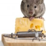 7 Best Mouse Trap Options For Mouse Control