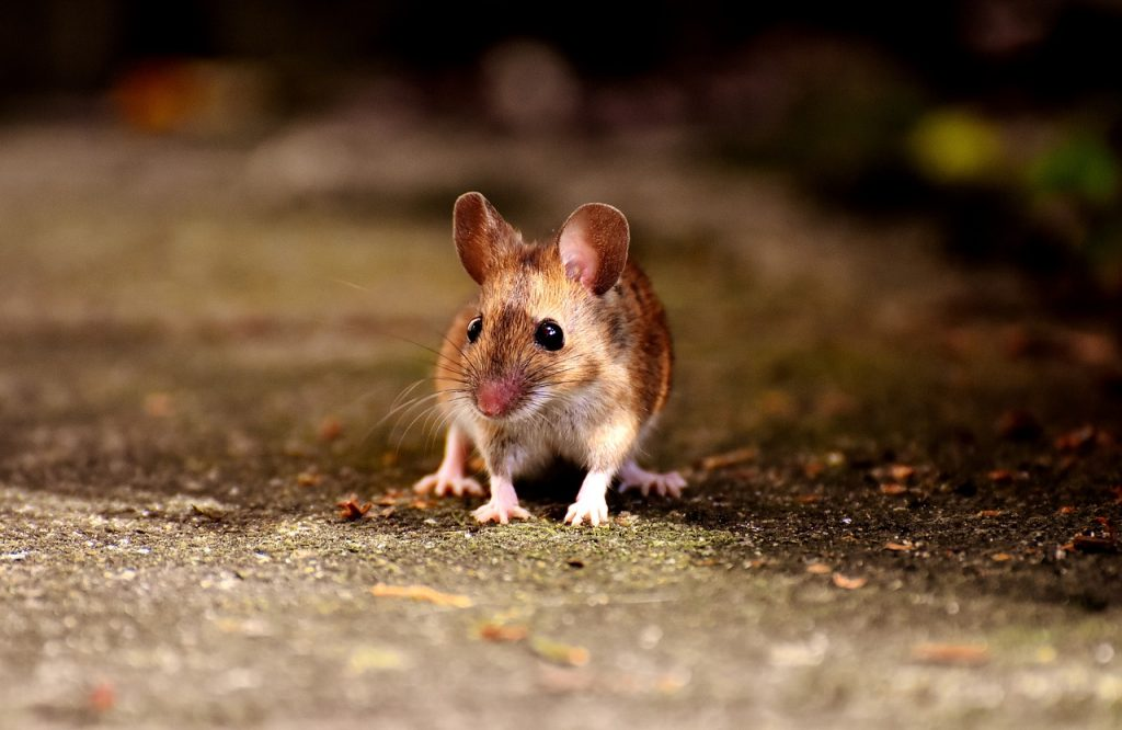 If You See One Mouse How Many Do You Have