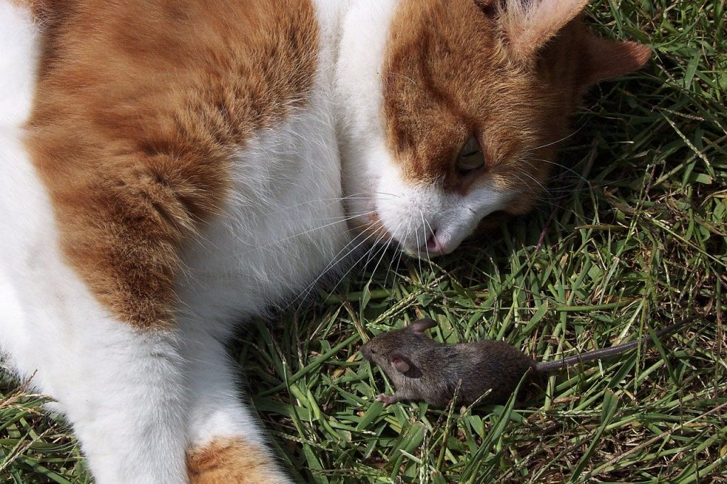Are glue traps one of the cruelest forms of mice control