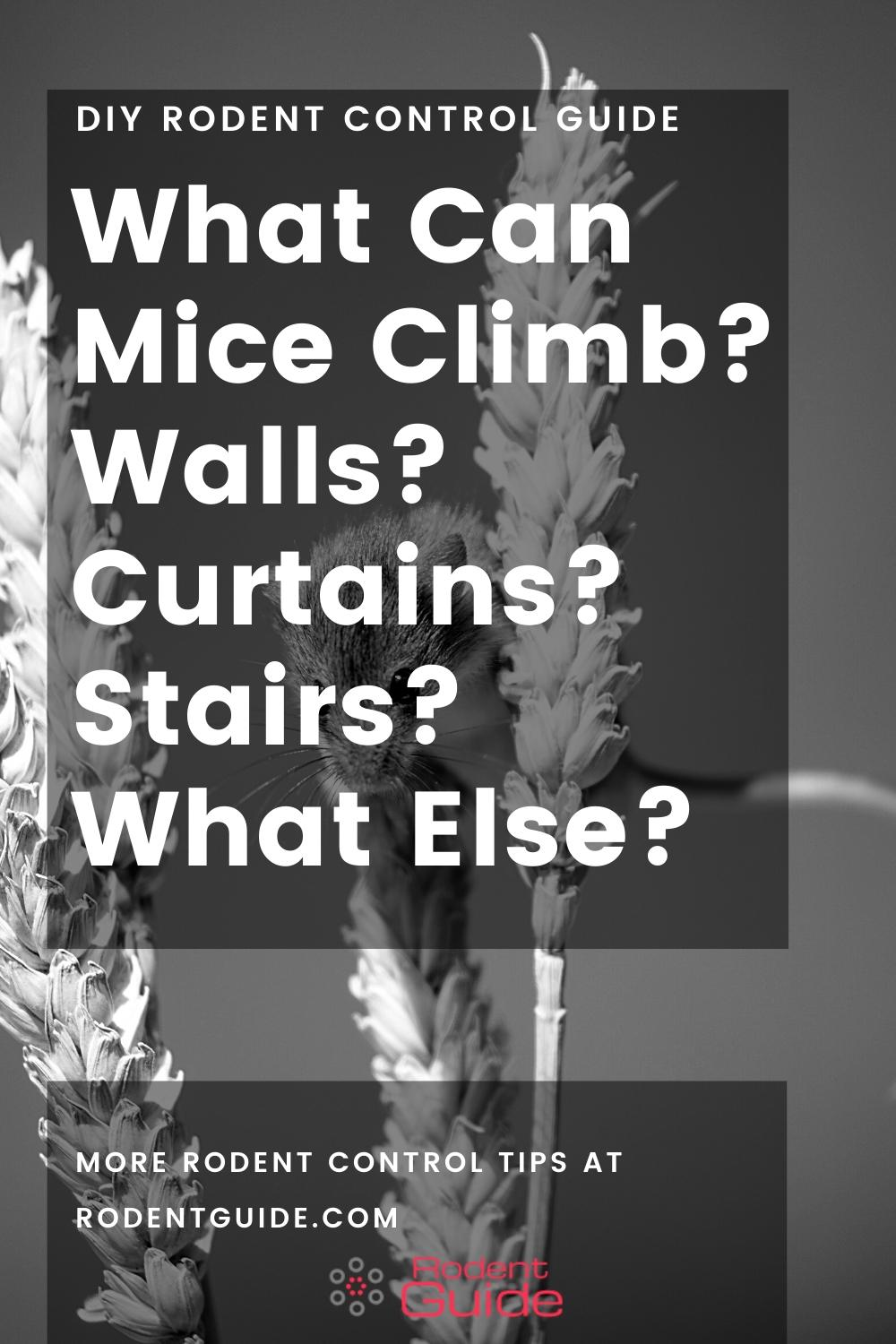 What Can Mice Climb