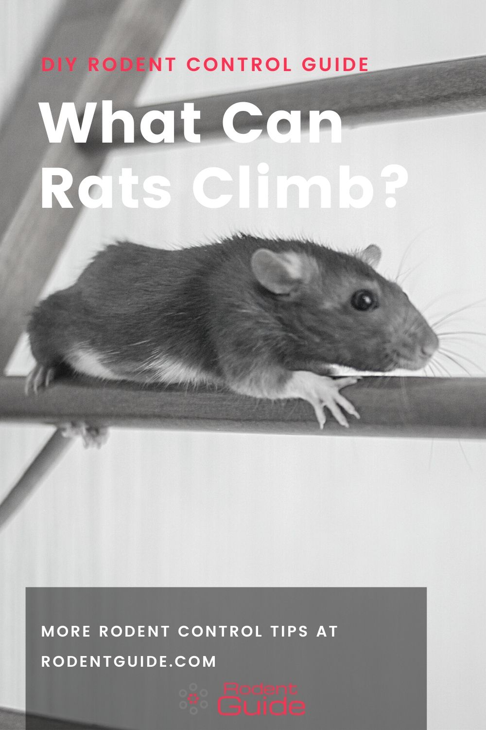 What Can Rats Climb
