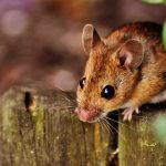 Can Mice Climb? Yes - And Here Is A Detailed List