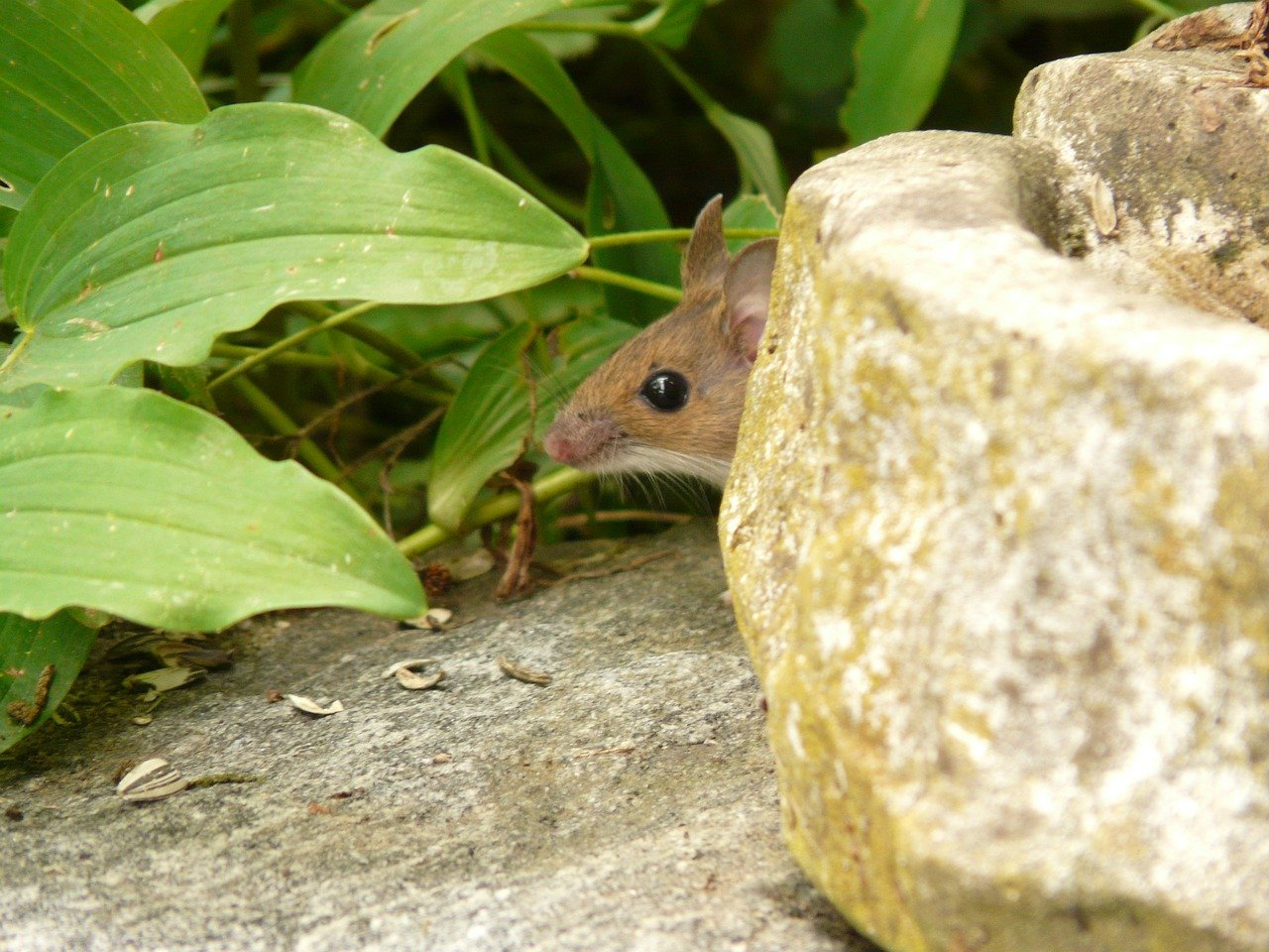 how do Ultrasonic Mice Repellents works