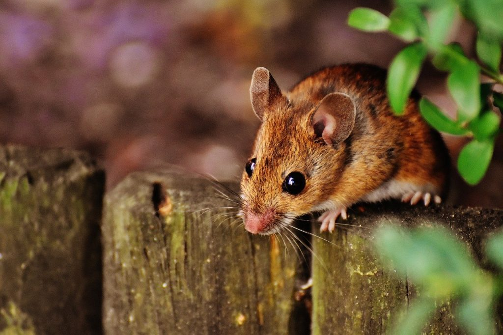 items that a mouse can climb