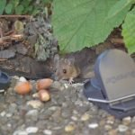 Mouse Caught In A Trap But Not Dead? Here Are Your Options