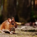 How To Catch A Mouse Alive - 5 Ways