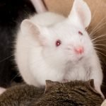 20+ Interesting Mice Questions
