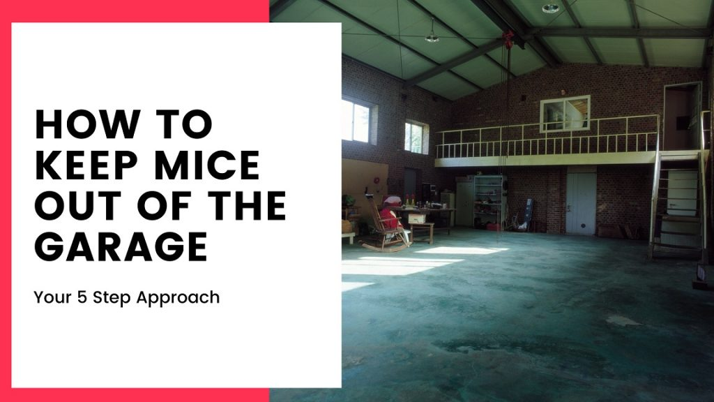 How To Keep Mice Out Of The Garage 5 Step Approach