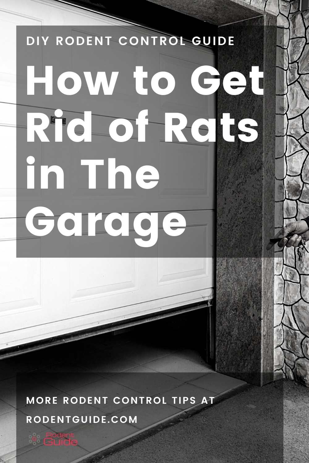 How to Get Rid of Rats in The Garage (1)