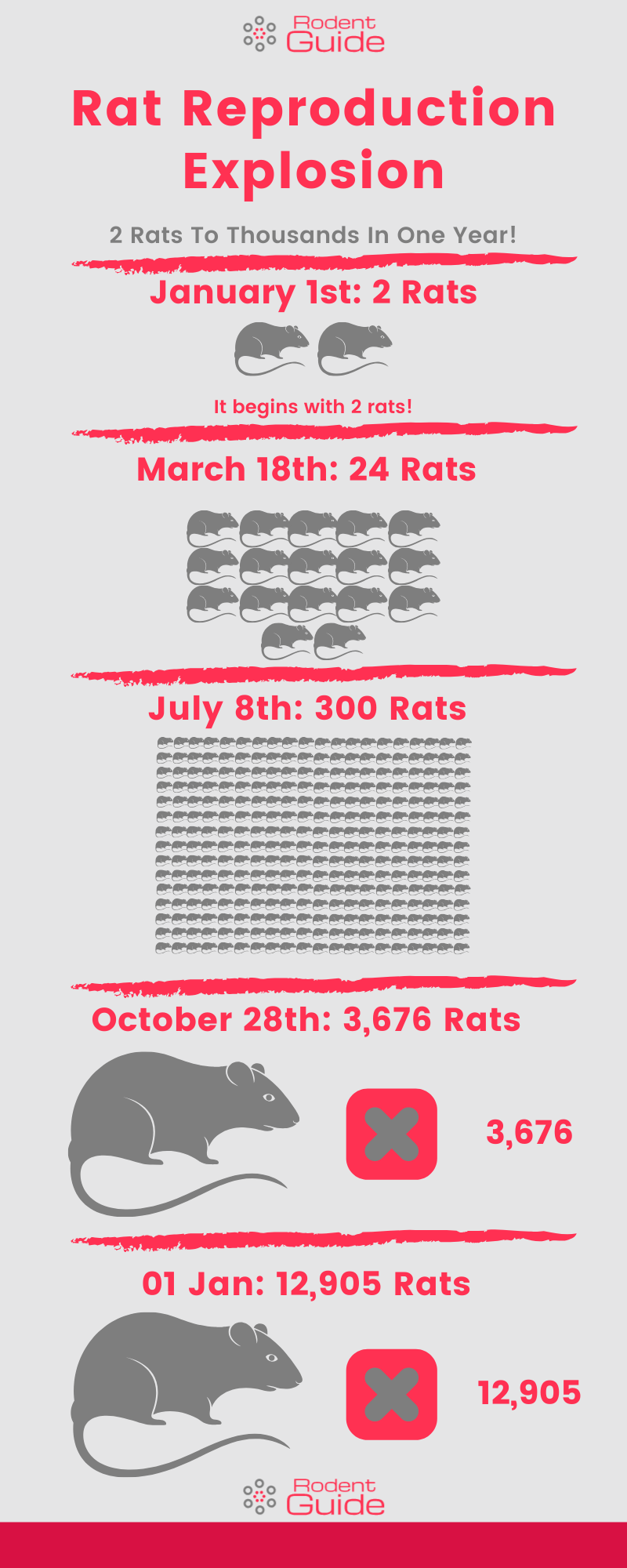 Rat Reproduction Explosion Infographic