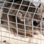 Get Rid Of Mice Without Killing Them