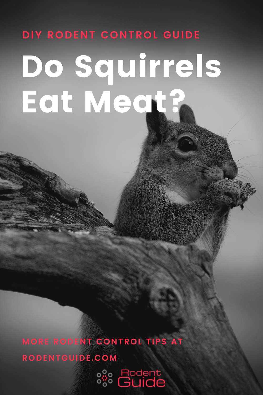 Do Squirrels Eat Meat_