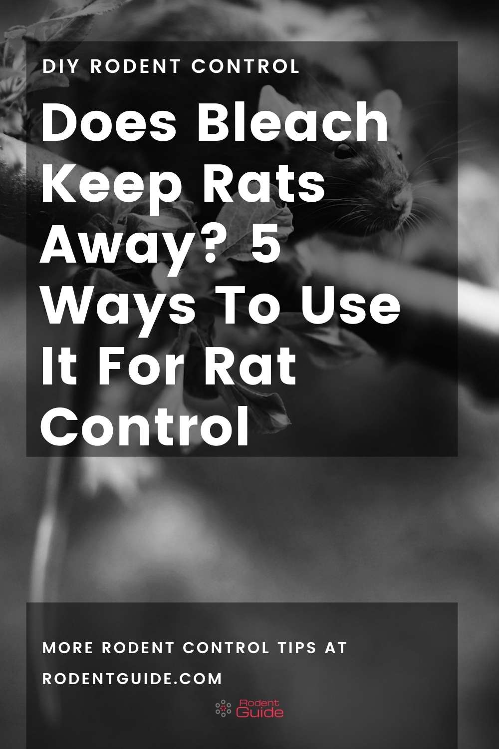 Does Bleach Keep Rats Away_ 5 Ways To Use It For Rat Control