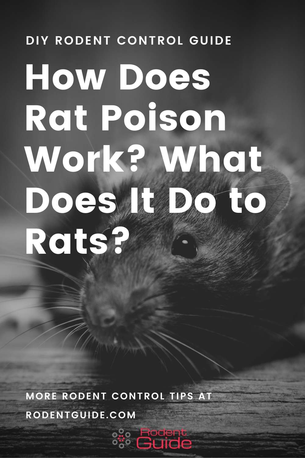 How Does Rat Poison Work