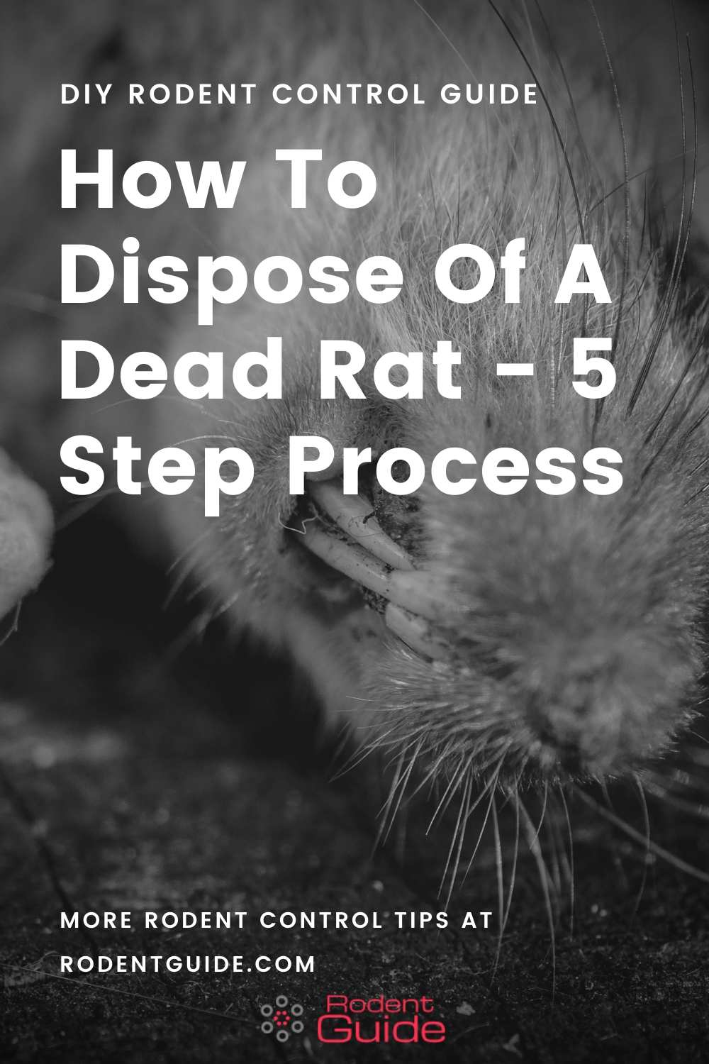 How To Dispose Of A Dead Rat 5 Steps