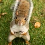 How To Keep Squirrels Out Of Your Yard (1)