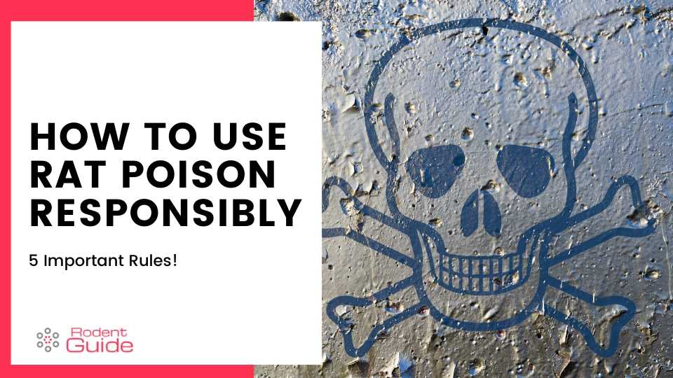 How To Use Rat Poison Responsibly