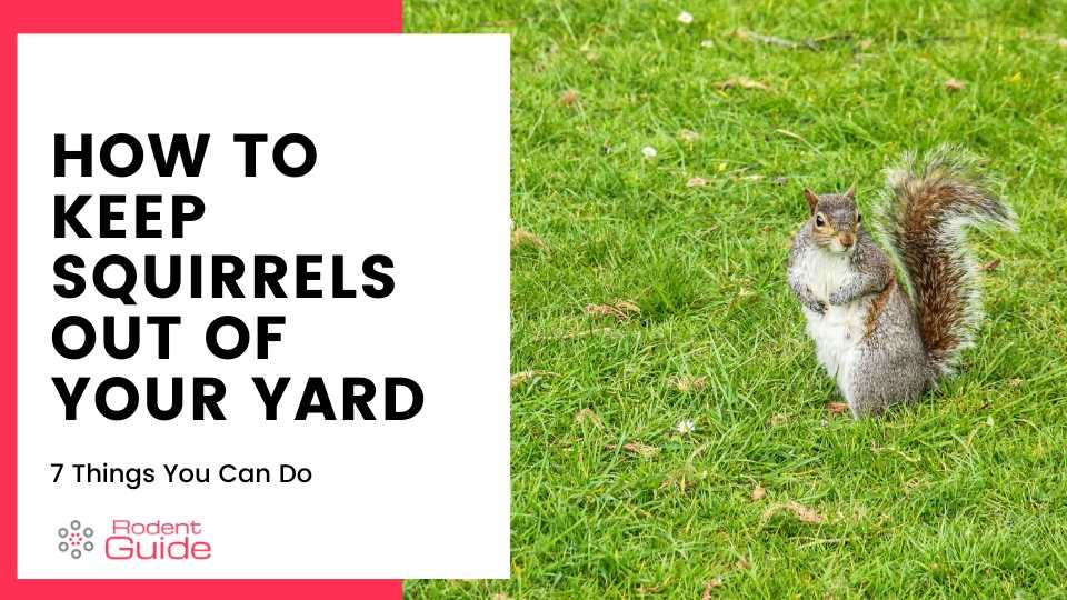 Keep Squirrels Out Of Your Yard