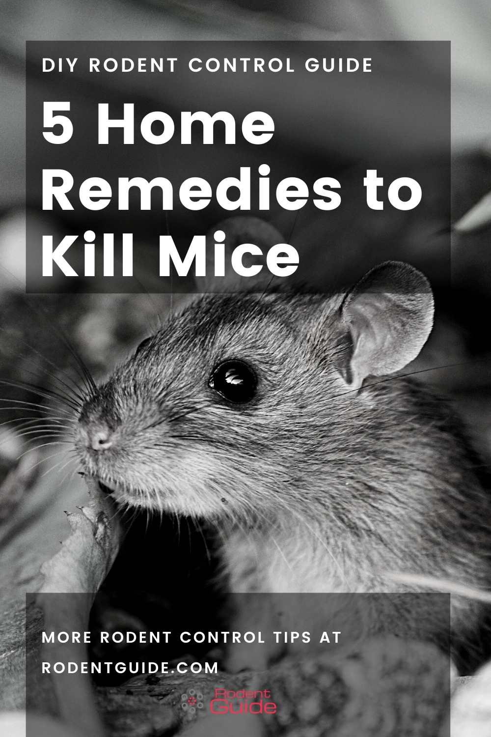 Mouse Trap: 5 Home Remedies to Kill Mice - DIY Rodent Control