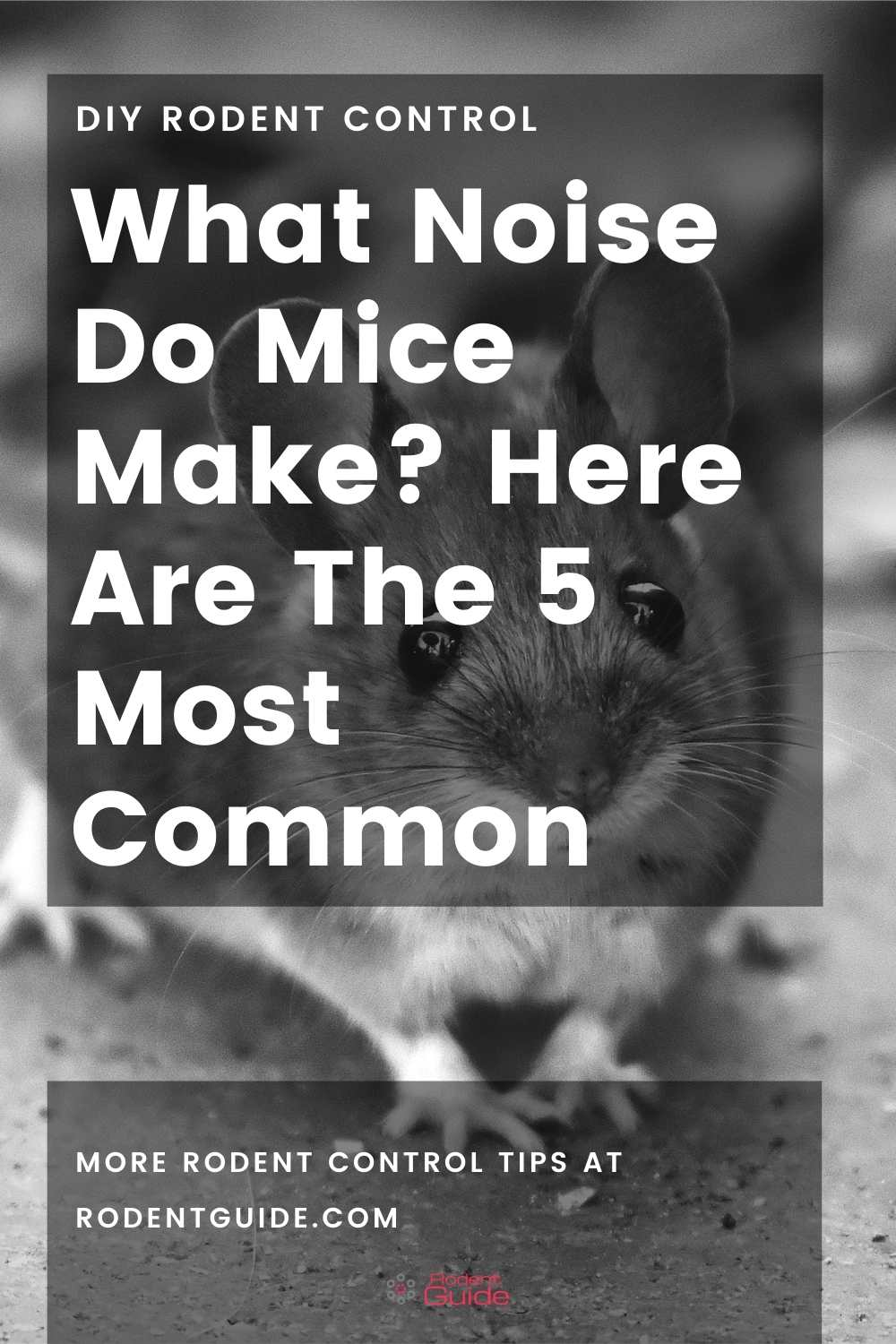 What Noise Do Mice Make_ Here Are The 5 Most Common