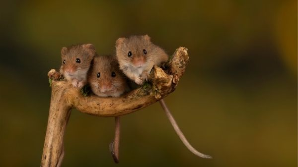 3 mice in yard on plant