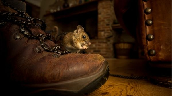 mouse on boot