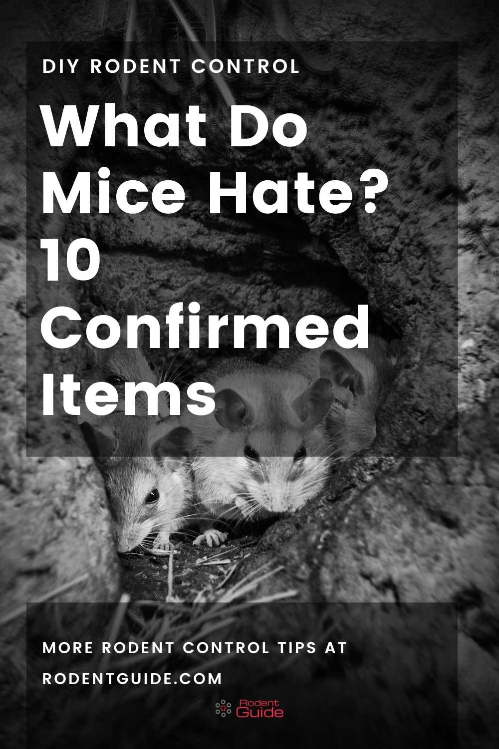 What Do Mice Hate_ 10 Confirmed Items