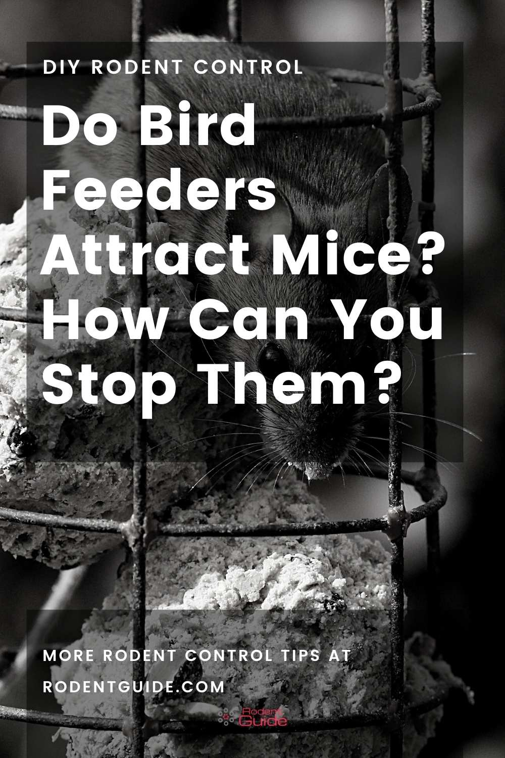 Do Bird Feeders Attract Mice_ How Can You Stop Them_