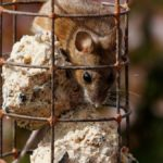 Do Bird Feeders Attract Mice? What Can You Do?
