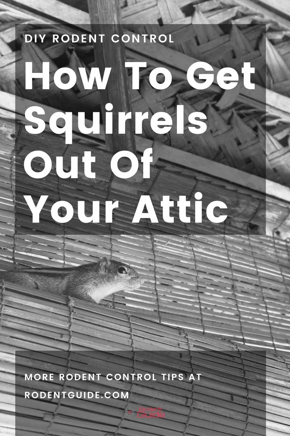 How To Get Squirrels Out Of Your Attic