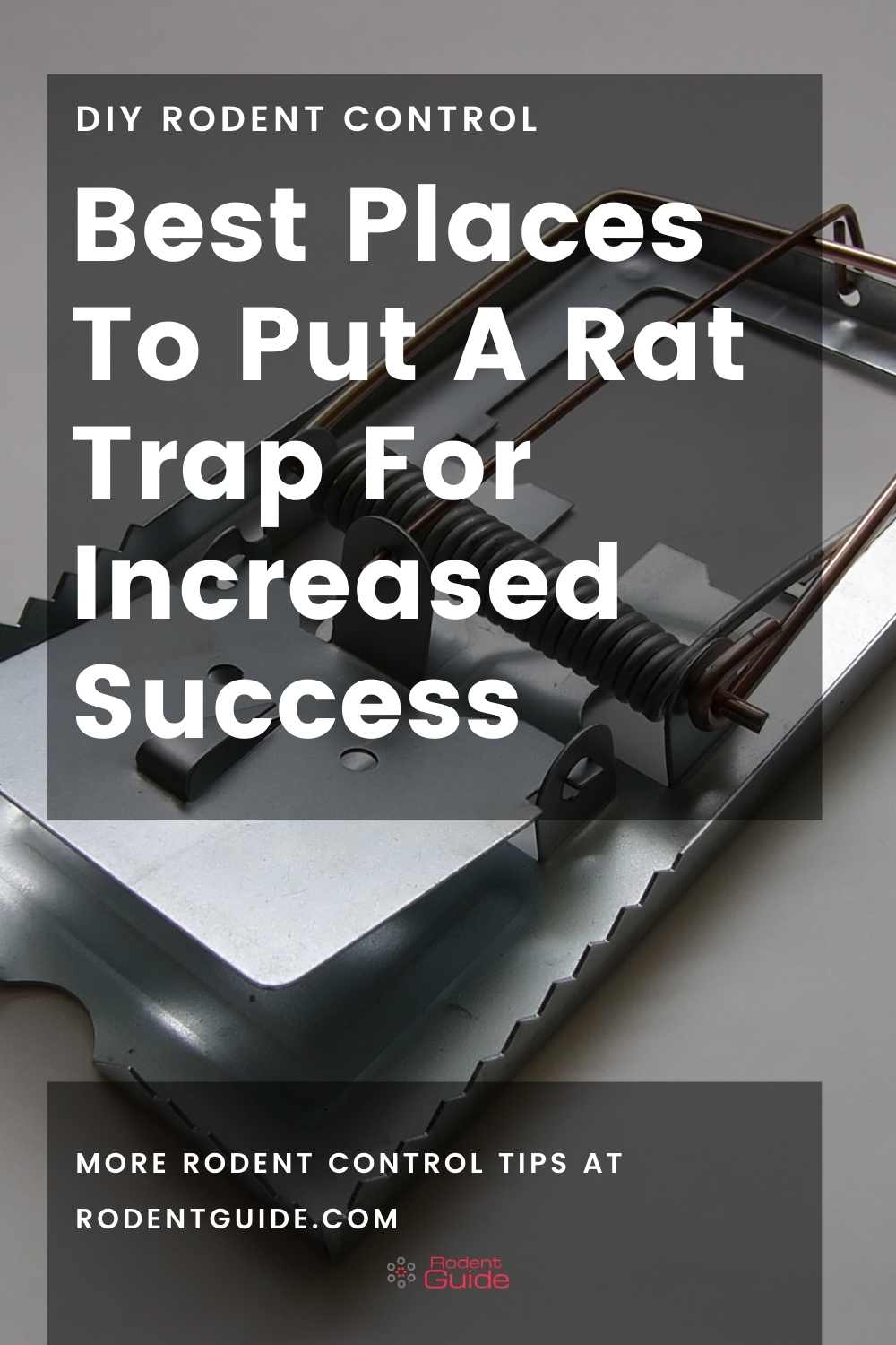 Best Places To Put A Rat Trap For Increased Success