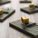 Can You Reuse Mouse Traps? Here Is Our Guide