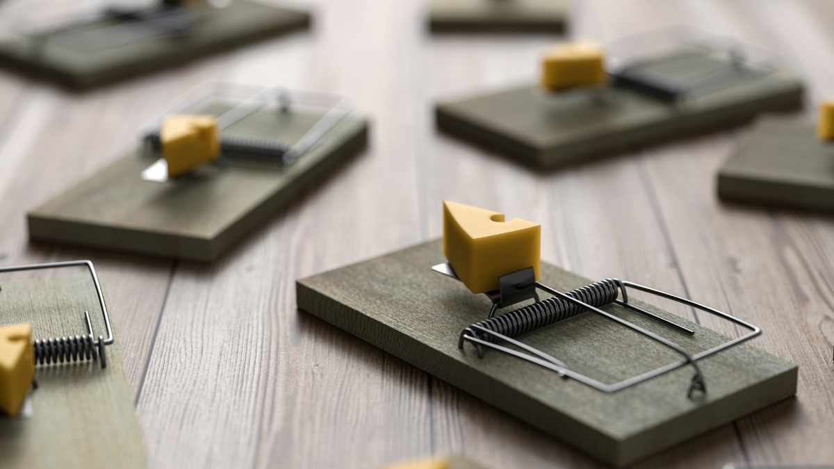 mouse traps with cheese on them