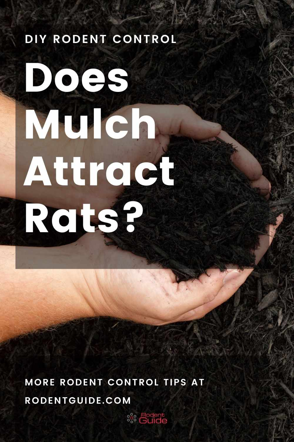 Does Mulch Attract Rats
