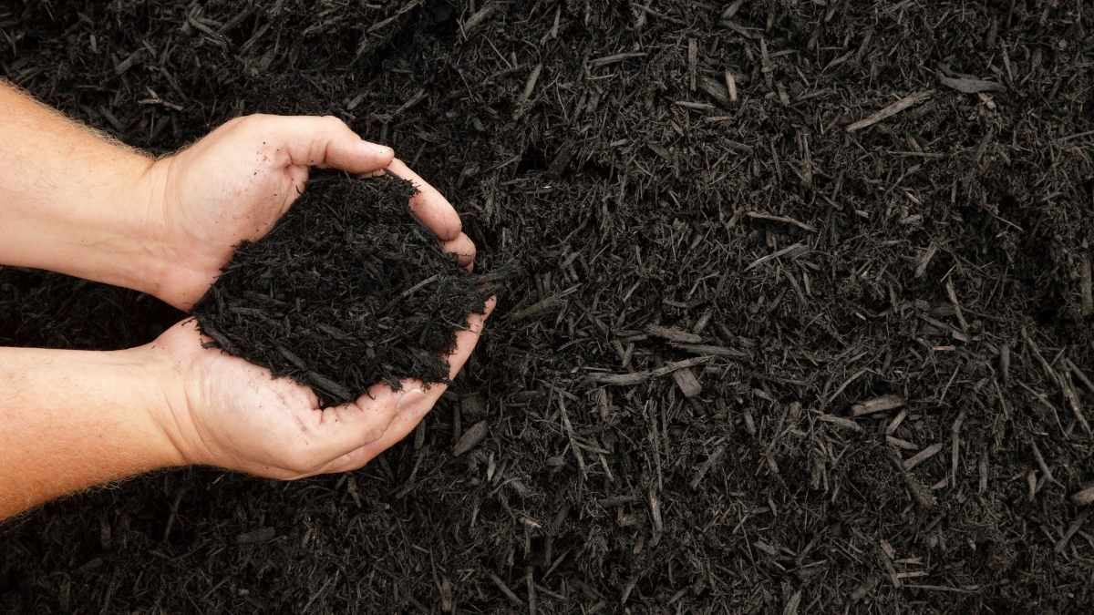 hand full of mulch - does it attract rats