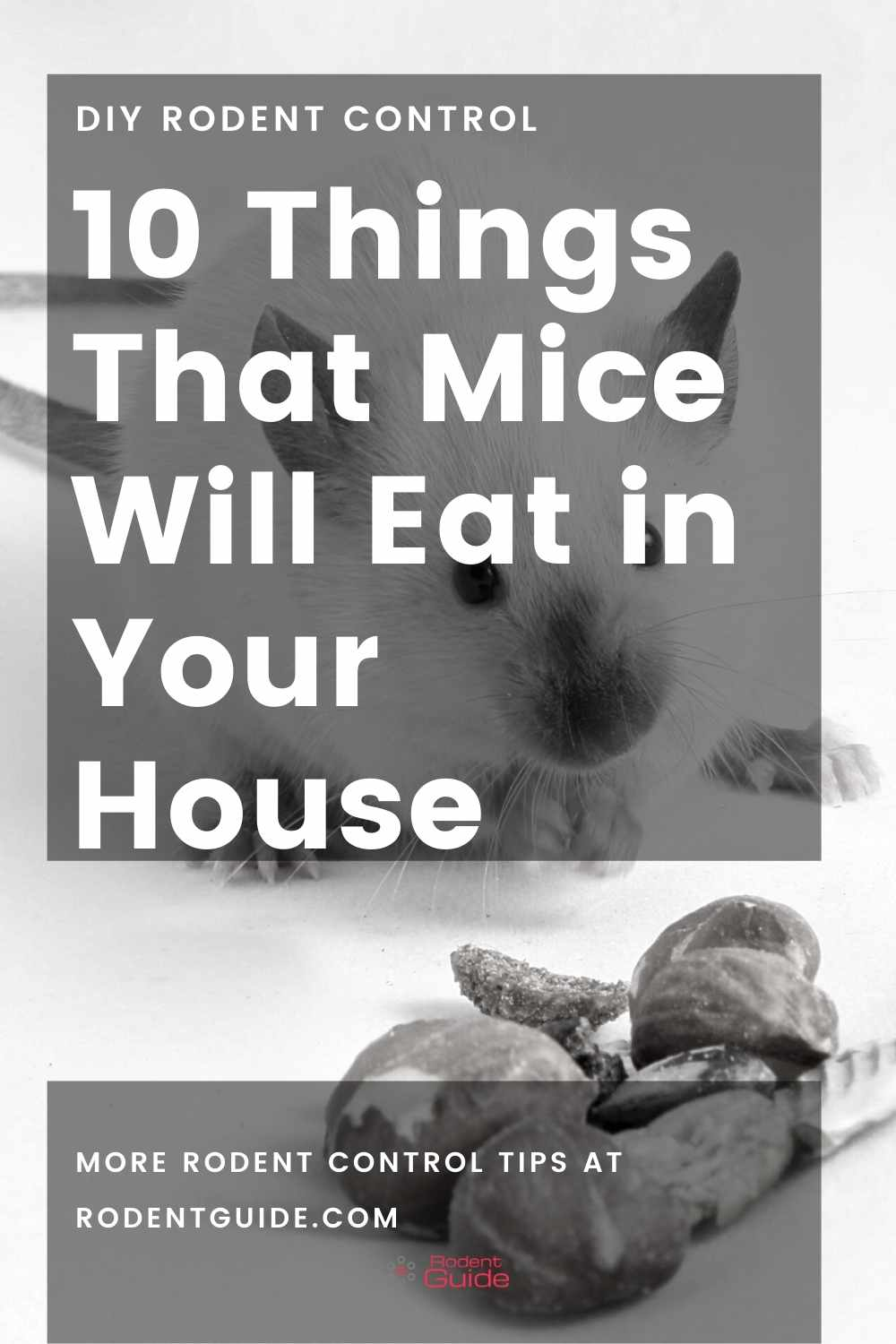10 Things That Mice Will Eat in Your House
