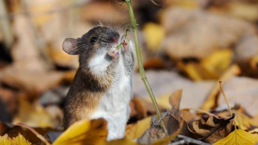 mouse eating plant